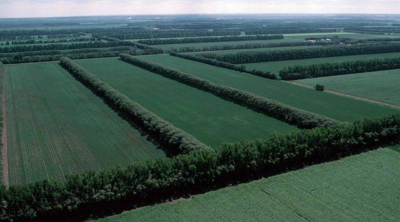 В Копчаке высадят 15 гектаров леса на деньги международного фонда