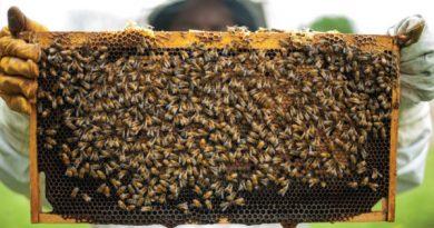 В Чадыр-Лунге на территории бывшей школы, откроется центр развития пчеловодства