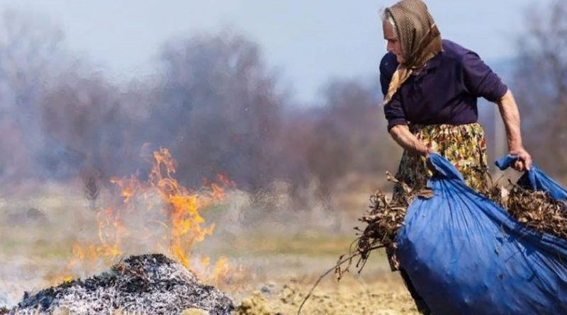 Наделали шороху! Или почему запрещено сжигать опавшие листья?