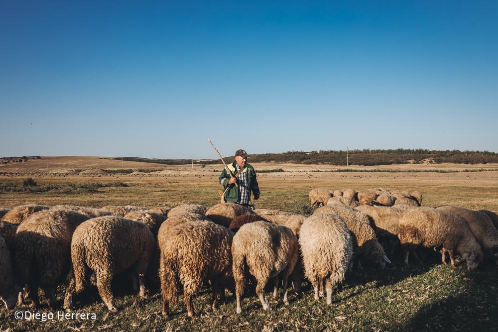 """""""Я видел людей, живущих в очень плохих условиях"""".  История фотожурналиста из Испании, который занимается волонтерством в Гагаузии"""