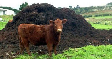 Молдова получит более 13 млн евро на решение вопросов по утилизации отходов животноводства