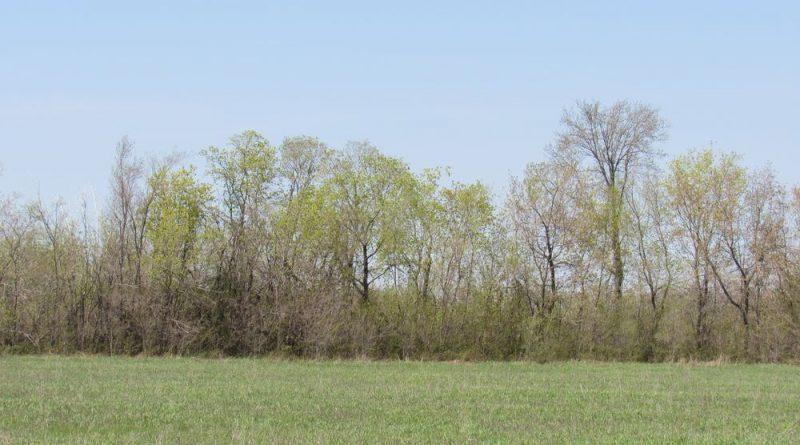 В трех населенных пунктах Гагаузии посадят и обновят 30 га лесополос