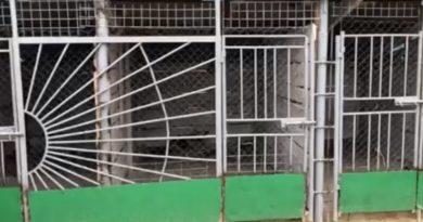 В Чадыр - Лунге открыли пункт для стерилизации бродячих собак