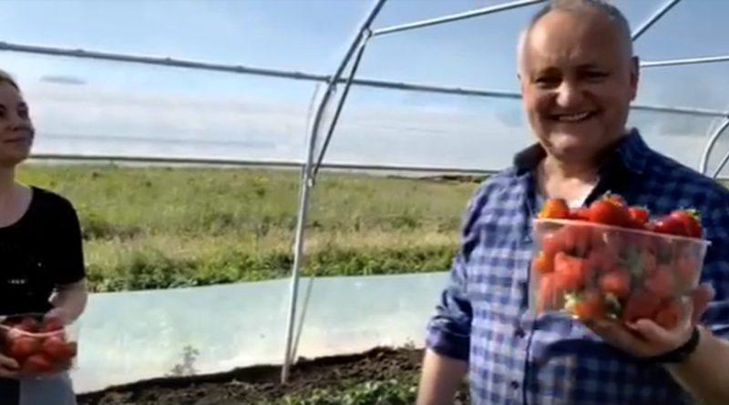 «Ему следует заняться выращиванием клубники или еще чем-то».  Бывший премьер-министр Ион Стурза призвал экс-президента Игоря Додона уйти из политики