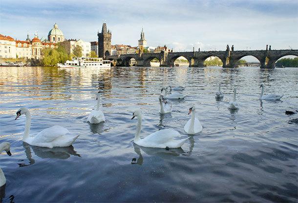 Eco-TIRAS: Молдова может перенять опыт Чехии в сокращении загрязнения воды