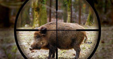 На юге Молдовы задержана группа браконьеров. Вместо охоты на лис они отстреливали кабанов