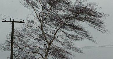Порывистый ветер и резкое снижение температур. В Молдове действует «желтый» код метеоопасности