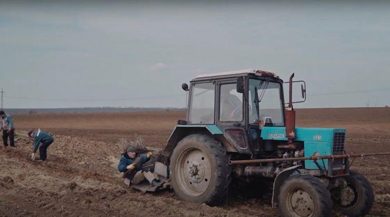 В Копчаке посадили 10 га леса при поддержке международного фонда