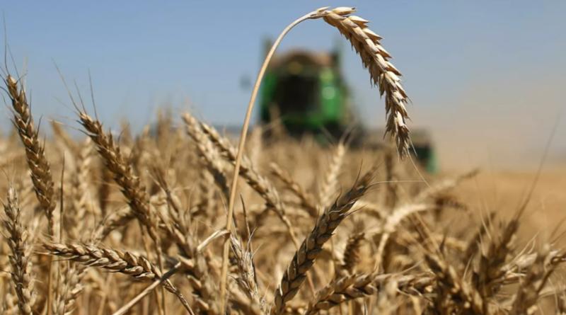В исполкоме Гагаузии рассказали о прогнозе на урожай в этом году