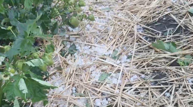 (Видео) Во Флорештском районе выпал град размером с черешню