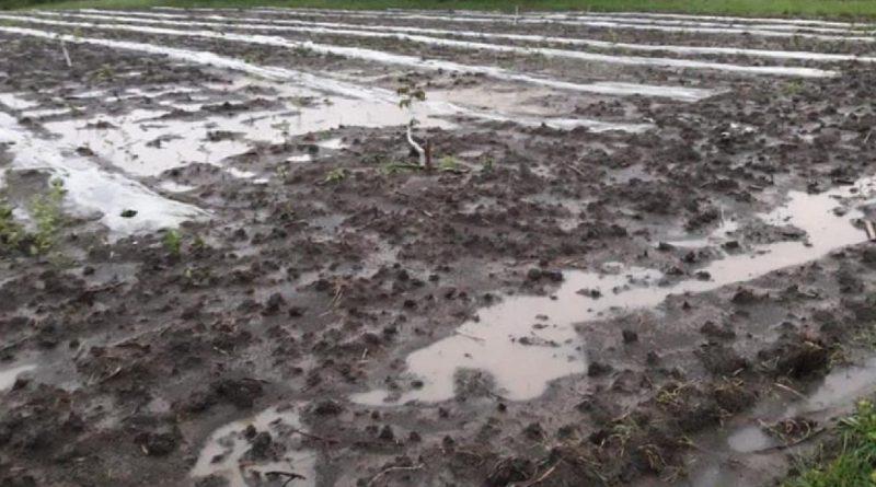 Дожди сказались на качестве будущего урожая: минсельхоз подсчитал ущерб, вызванный непогодой