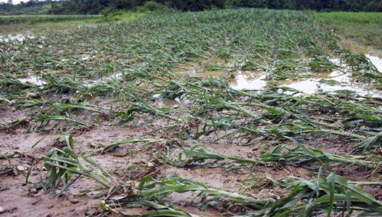 Минсельхоз: ущерб от ливней по всей Молдове составил более 227 млн леев
