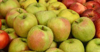 Молдавские садоводы не могут продать выращенные яблоки: прошлогодний урожай сдали на переработку, на новый спрос низкий
