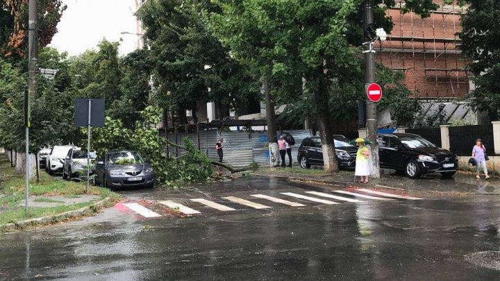 (Фото) Синоптики предупреждали: на Кишинёв обрушился ливень с сильным ветром