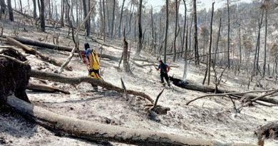 (Фото) Молдавские пожарные за сутки ликвидировали более 50 пожаров в Греции