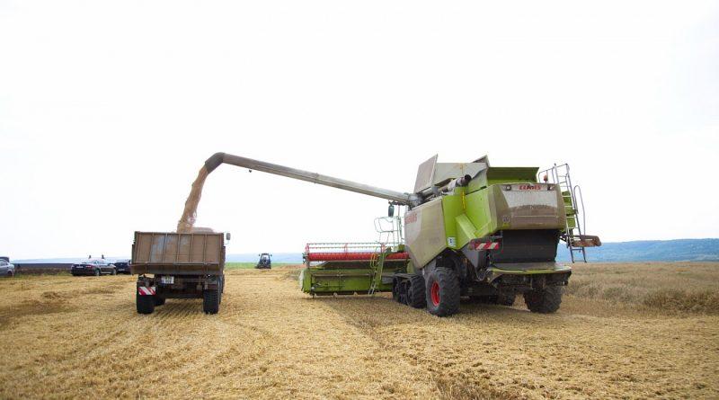 В Гагаузии ожидают рекордного урожая зерновых за период существования автономии
