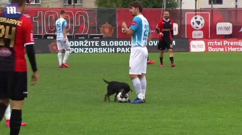 (Видео) В Боснии и Герцеговине во время футбольного матча собака выбежала на поле и утащила мяч
