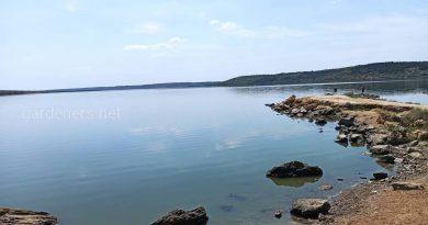 В Одесской области утонул мужчина. В воду его утащила крупная рыба
